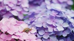 Pretty Snail Wallpaper 35694