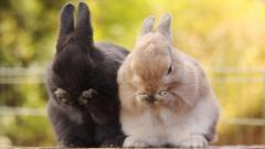 Rabbit Wallpaper 35241