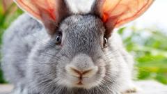 Rabbit Wallpaper HD 35251