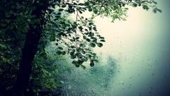 Rainy 34629