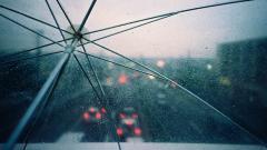 Rainy 34639