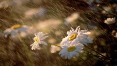 Rainy Pictures 34634