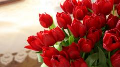 Red Tulips 12644