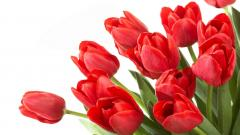 Red Tulips 12654