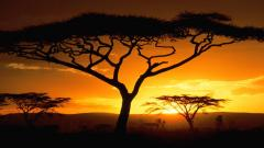 Safari Wallpaper 21047