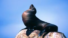 Sea Lion 9620