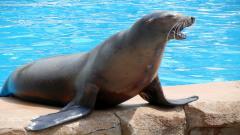 Sea Lion 9624