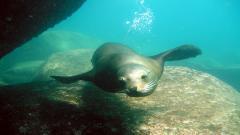 Sea Lion 9626