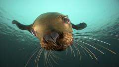 Sea Lion 9637