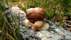 Snail Wallpaper 35677