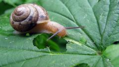 Snail Wallpaper 35681