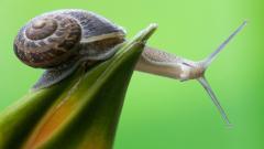 Snail Wallpaper 35689