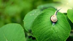 Snail Wallpaper HD 35686