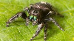Spider 23763