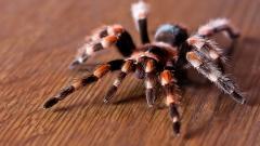 Spider Wallpaper 23754