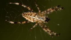 Spider Wallpaper 23759