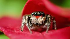 Spider Wallpaper 23761