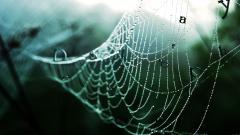Spider Web 23770