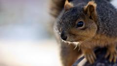 Squirrel 34503