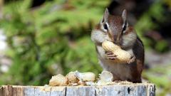 Squirrel Background 34497