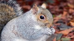 Squirrel Pictures 34496