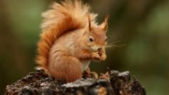 Squirrel Pictures 34500