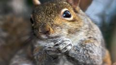 Squirrel Pictures HD 34504