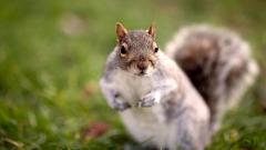 Squirrel Wallpaper 34476