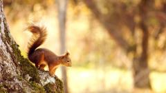 Squirrel Wallpaper 34491