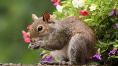 Squirrel Wallpaper 34493