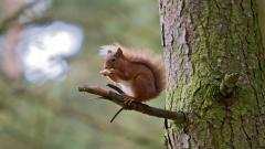 Squirrel Wallpaper 34494