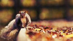Squirrel Wallpaper HD 34479