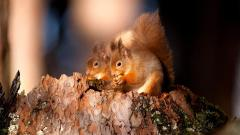 Squirrel Wallpapers 34487