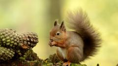 Squirrel Wallpapers 34505