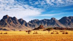 Stunning Safari Wallpaper 21042