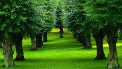 Tree Wallpaper 10030