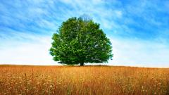 Tree Wallpaper Background 10033