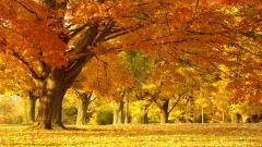 Tree Wallpaper 10035