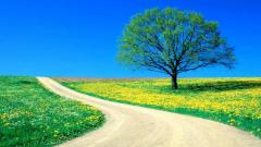 Tree Wallpaper 10036