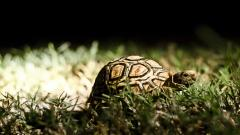 Turtle Wallpaper 4648