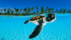 Turtle Wallpaper 4650