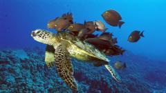 Turtle Wallpaper 4655