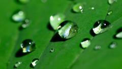 Water Drops 26141