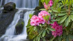 Waterfall 6275