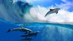 Wave Wallpaper 12060