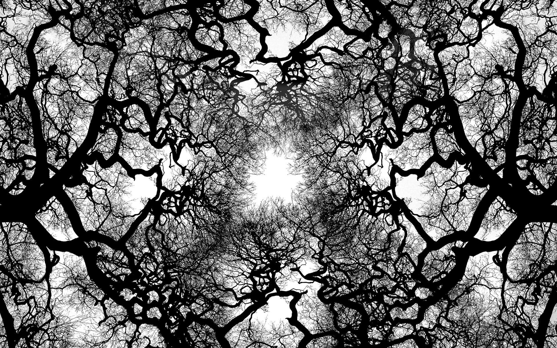 monochrome tree wallpaper 10055