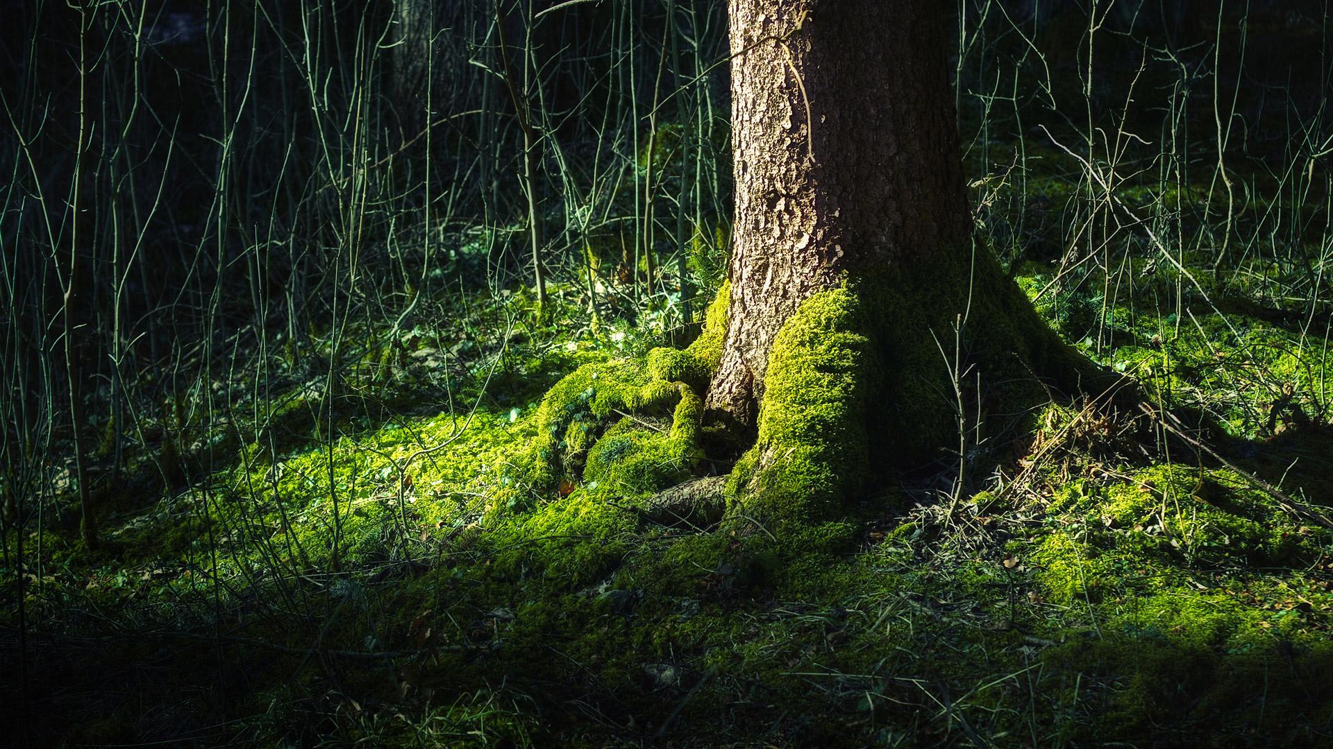 tree desktop wallpaper hd 10056