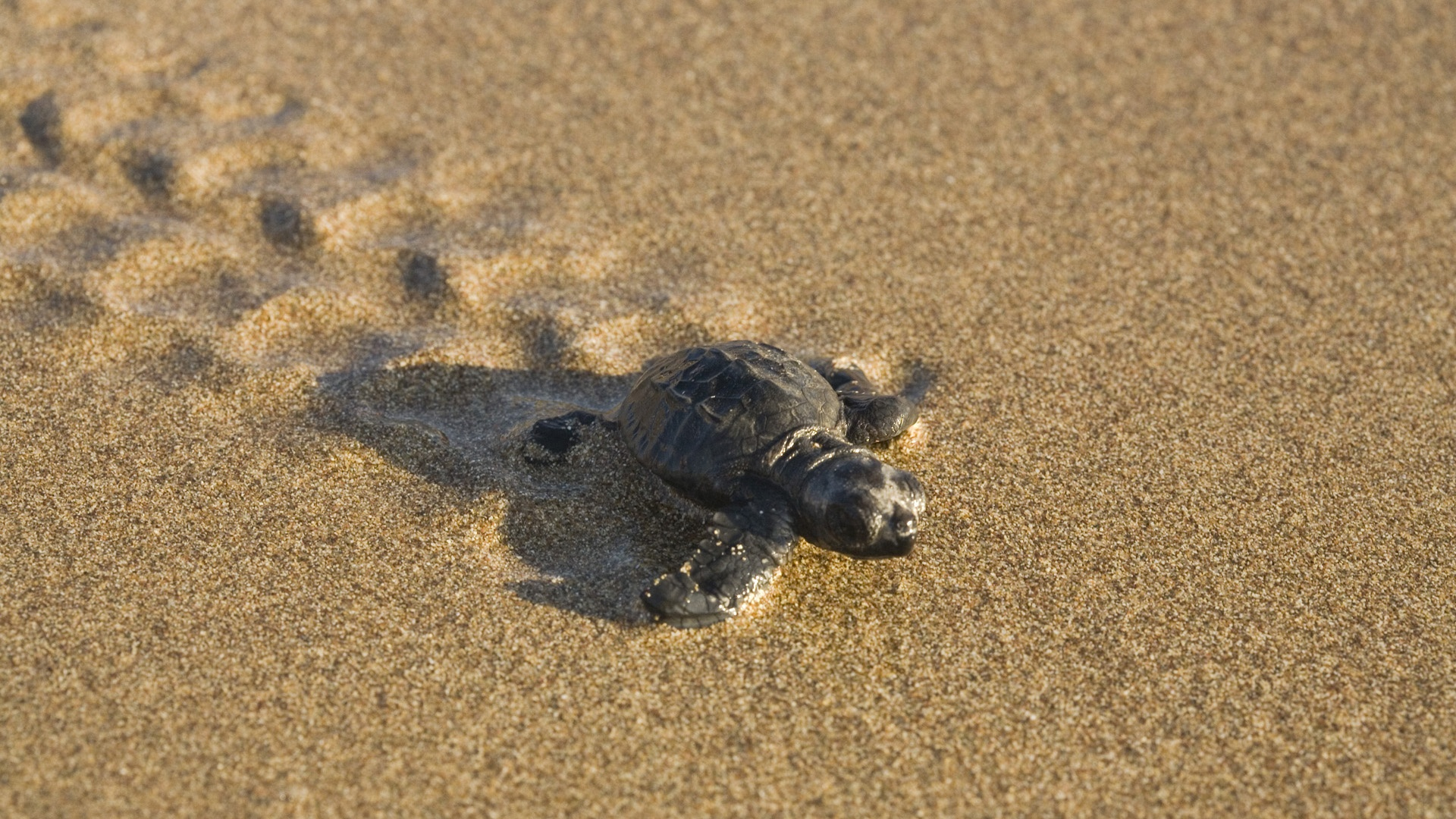 Download Turtle Wallpaper 4649 1920x1080 Px High Resolution