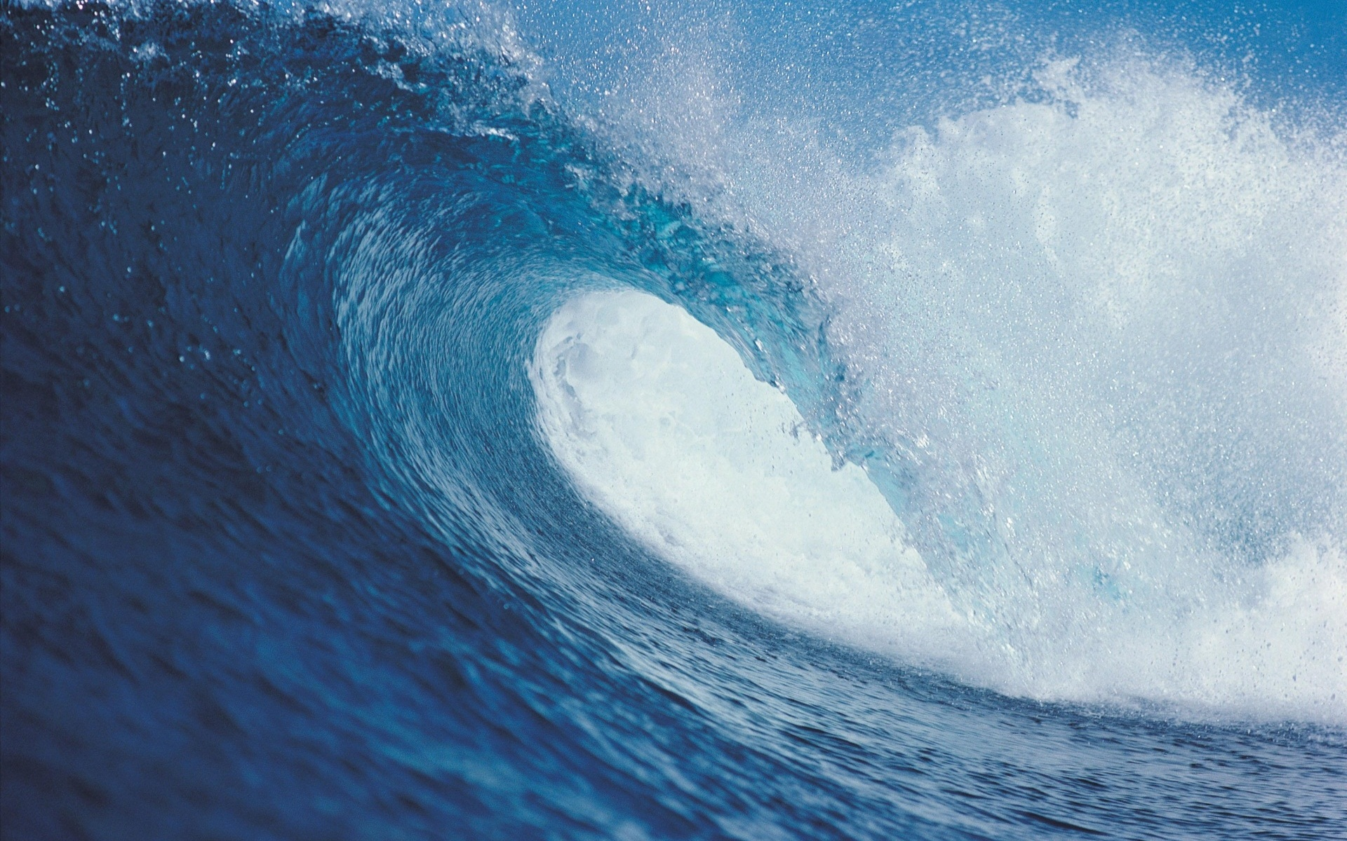 Wave Wallpaper 12055 on Ocean Animals