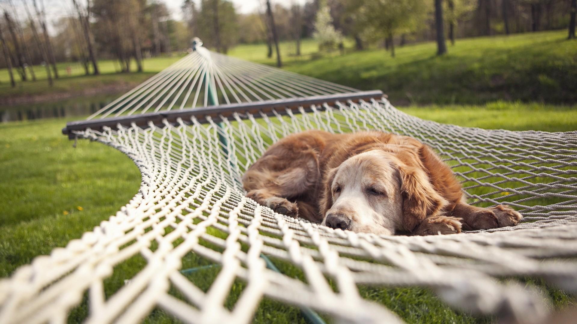 adorable hammock wallpaper 43361